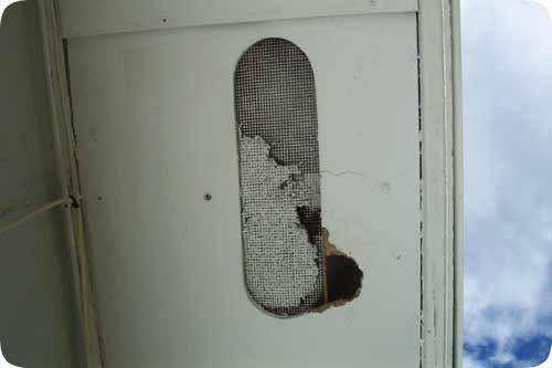 Photos Of Rat Damage