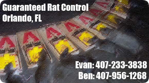 Orlando Pest Control Amp Rat Removal Company